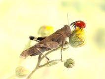 Gafanhoto e joaninha junto em uma flor amarela Fotografia de Stock