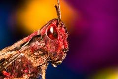 Gafanhoto em um fundo colorido Imagens de Stock Royalty Free