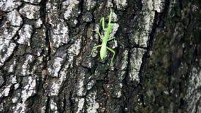 Gafanhoto na árvore video estoque