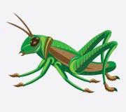 gafanhoto Verde-marrom. ilustração royalty free