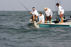 The gaff is in the tarpon. And now it's off to the weighmaster Stock Photo