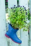Gaffelbenblomman, blått påskyndar, Torenia på kängor Royaltyfria Bilder
