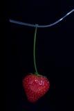 gaffeljordgubbe Fotografering för Bildbyråer