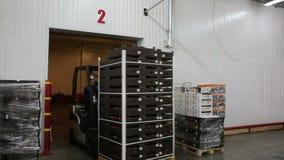 Gaffeltruckpåfyllningpaletter i lagringsrum stock video
