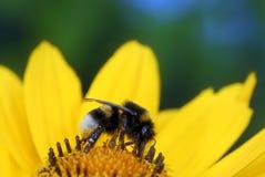 Gaffez l'abeille Photos stock