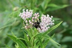 Gaffez l'abeille Photos libres de droits