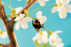 Gaffez l'abeille photographie stock libre de droits
