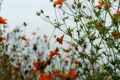 Gaffez l'abeille dans la plantation de fleurs photo libre de droits