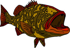 Gag grouper Royalty Free Stock Image
