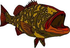 Gag grouper. Vector - fish gag grouper isolated on white background royalty free illustration