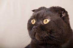 Gaga кот Стоковое Изображение