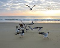 A Gaggle of Gulls Royalty Free Stock Image