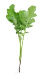 A gai lan tree Stock Images