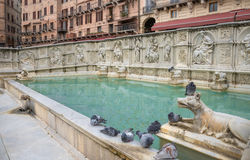 Gaia fountain -Siena Royalty Free Stock Image