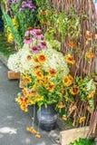 Gaillardia (Blanket Flower) Stock Photos