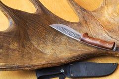 Gaine de couteau de chasse et un chasseur de trophée - grand klaxon d'élans. Image libre de droits