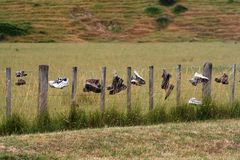 Gaines isolées Images libres de droits