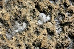 Gaining of sea salt. Sea salt is drying on a volcano rock Stock Image