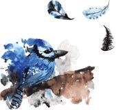 Gaio desenhado à mão do pássaro da aquarela Foto de Stock Royalty Free