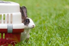 Gaiola de assento do behide do coelho feliz no parque imagens de stock