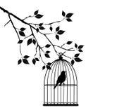 Gaiola de pássaro Fotografia de Stock Royalty Free