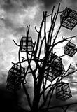 Gaiola de pássaro preto e branco Imagem de Stock