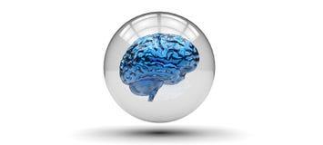 Gaiola do cérebro Fotografia de Stock