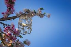 Gaiola do ` s do pássaro na árvore da flor Foto de Stock