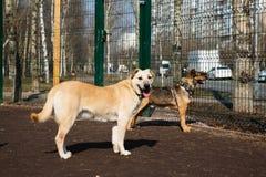 Gaiola para cães no abrigo animal fotografia de stock royalty free