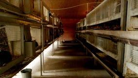 Gaiolas com coelhos em produzir a exploração agrícola foto de stock royalty free