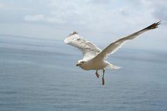 A gaivota acima de meditaranean vê Foto de Stock Royalty Free