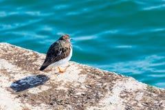 Gaivota agradável do pássaro que olha o mar imagens de stock