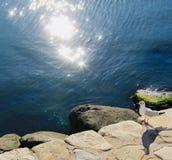 gaivota bonita perto do mar Cáspio imagens de stock royalty free