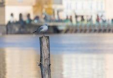 A gaivota branca está estando em uma pilha de madeira no meio do sol fotografia de stock