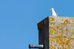 Gaivota branca no cume dos telhados de uma cidade litoral europeia medieval P?ssaro de mar, front?o, c?u azul fotografia de stock