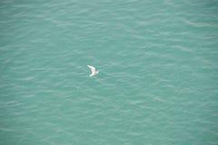 Gaivota branca sobre a água azul Foto de Stock Royalty Free