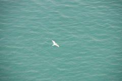 Gaivota branca sobre a água azul Imagens de Stock
