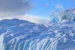 Gaivota da alga e andorinhas-do-mar árticas que voam e que sentam-se no iceberg, península antártica Fotografia de Stock Royalty Free