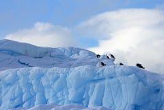 Gaivota da alga e andorinhas-do-mar árticas que voam e que sentam-se no iceberg, península antártica Foto de Stock Royalty Free
