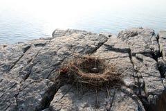 Gaivota de arenques do ninho e do ovo em uma rocha Imagem de Stock Royalty Free