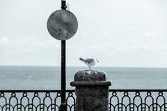 Gaivota de Cyanotype em uma parede litoral Fotos de Stock