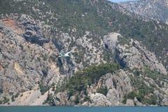 Gaivota de mar sobre o desfiladeiro fotografia de stock royalty free