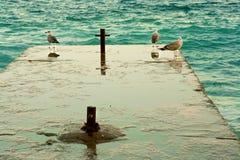 Gaivota de mar três tranquilo no cais Fotos de Stock Royalty Free