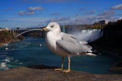Gaivota de Niagara Fotografia de Stock