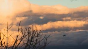 Gaivota de voo com extensão perfeita da asa no fundo um céu nebuloso imagem de stock royalty free