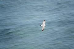 a gaivota desliza sobre o mar azul e é fotografada de cima de imagens de stock royalty free