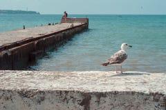 Gaivota do albatroz no cais do mar Fundo Fotos de Stock Royalty Free