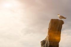 Gaivota do pássaro que senta-se na árvore seca velha Fundo da nuvem Conceito Marine Dream Imagens de Stock Royalty Free