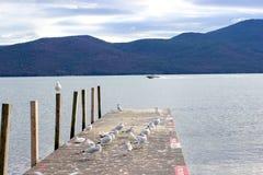 Gaivota e barcos na praia Fotos de Stock