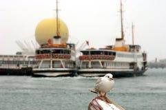 Gaivota e ferryboats Imagem de Stock